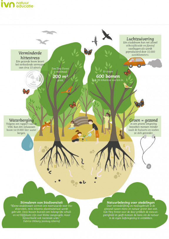 infographic,Tiny Forest,biodivrsiteit