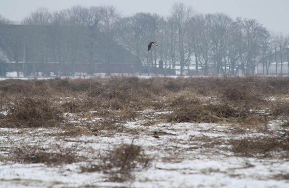 winter excursie vogel zeearend