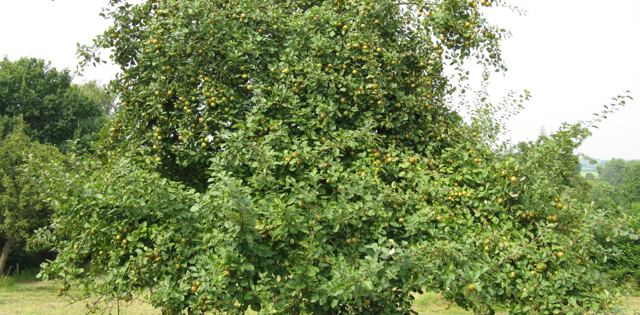 Appelboom Palland