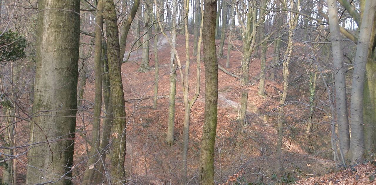 Stammenderbos (foto: Wikimedia Commons)