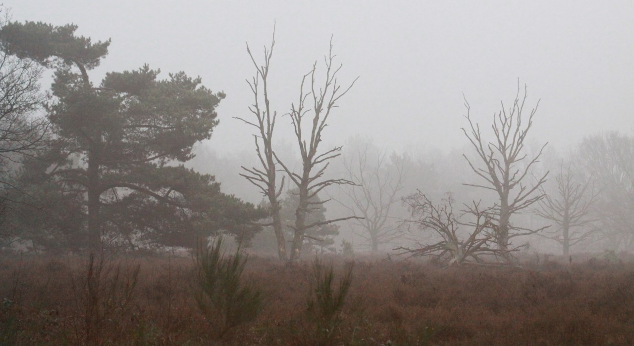 Heidegbied in de mist
